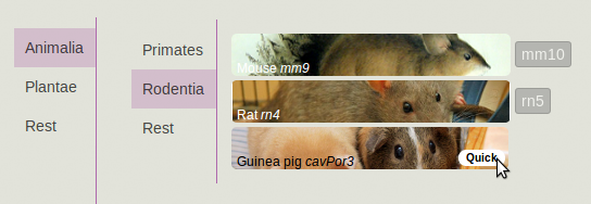 V34 (1 of 2)- Genomes of human (hg38), and Guinea pig (cavPor3) 1 1.png